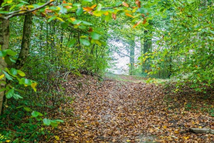 La loi du profit fait mourir les forêts