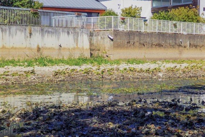 Dans l'Indre, il pleut mais la sécheresse demeure