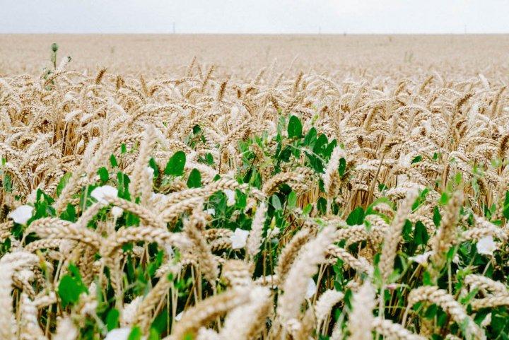 La ferme de demain, écolo et prospère, existe déjà, nous l'avons visitée