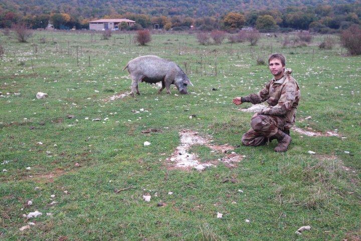 Sur le Larzac, l'éleveur de porcs au naturel voit l'avenir en rose