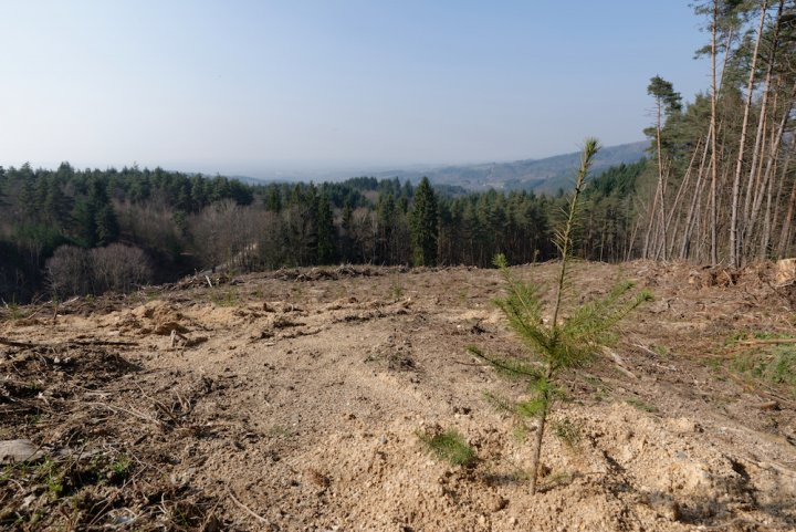 Forêt : au nom de l'économie, on détruit un capital naturel