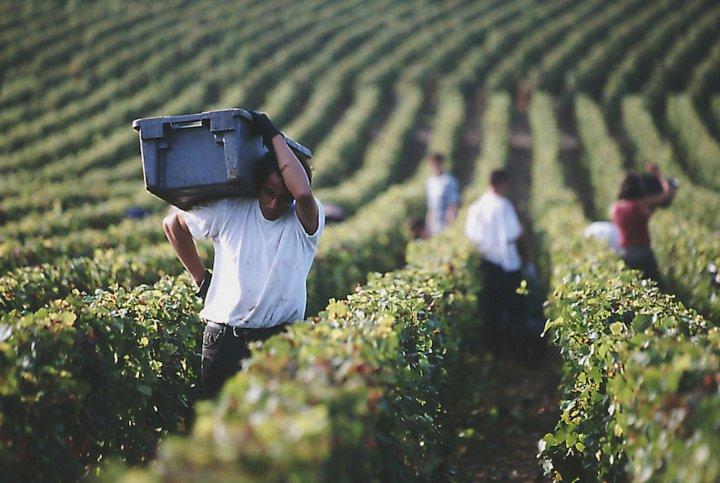 Les travailleurs saisonniers subissent l'enfer de l'agriculture industrielle