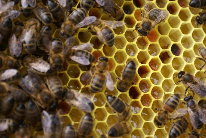 L'éolien industriel et les abeilles ne vont pas bien ensemble