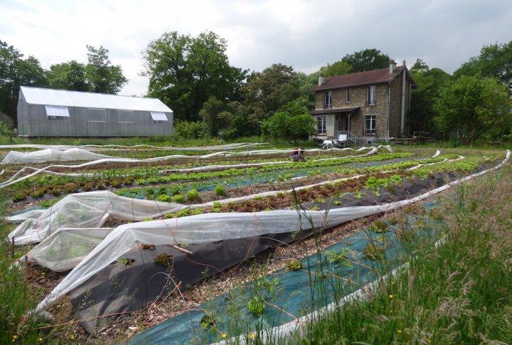 V'île fertile, l'agriculture urbaine prend racine aux portes de Paris